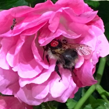 Win £100 best photo of 'Licence Plated' Bees