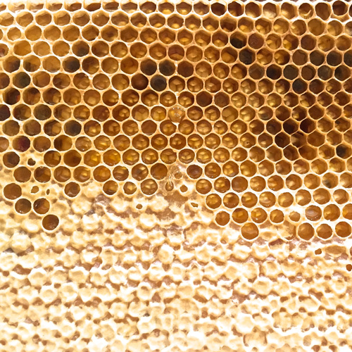 ENGLISH Wildflower Honeycomb & POLLEN, Whole Frame