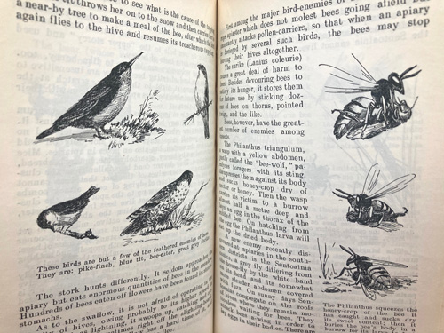 I. Khalifman-BEES, 1953 book on the biology of the bee colony