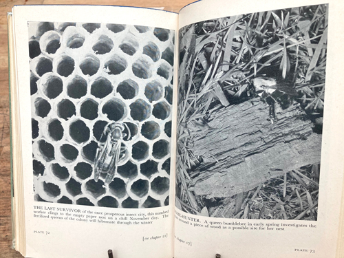 Near Horizons- The story of an insect garden, 160+ photographs